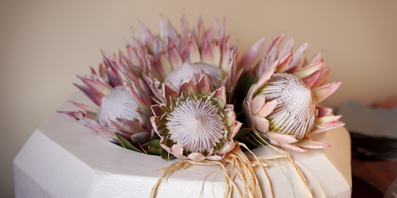 wendy-swart-photography-15